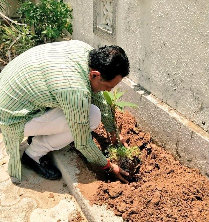 વિશ્વ પર્યાવરણ દિવસ નિમિત્તે વૃક્ષારોપણ